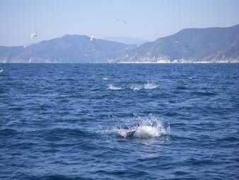 Pesca sportiva: Viaggio tra mostri veri e mostri d'ignoranza